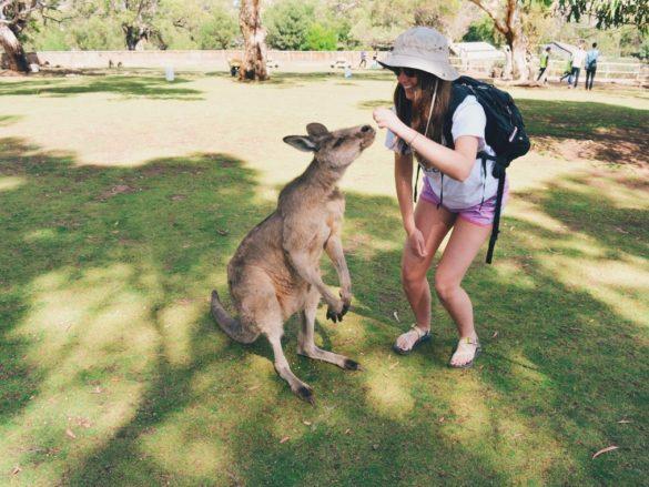 Woman feeding kangaroo in Australia