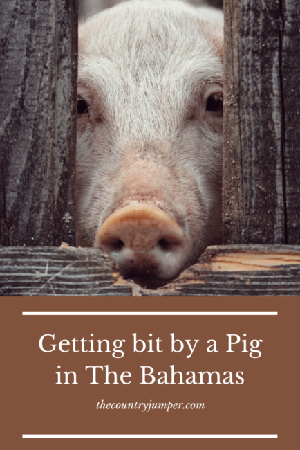Accidents happen abroad - which is why you always need to make sure you have travel insurance! Here's my fun story of once upon a time in The Bahamas...with a pig...