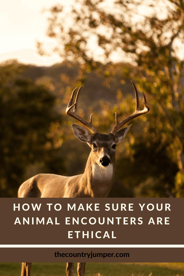 https://www.thecountryjumper.com/animal-tourism/