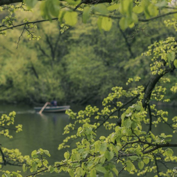row boat on water through green foliage