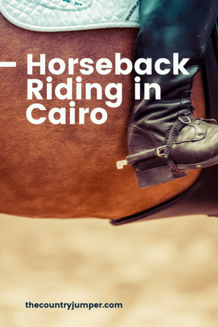 Are you thinking about going horseback riding in the desert of Cairo? If so, you'll want to be riding Arabian horse, from the area. Riding in Egypt is a great way to get out into untouched parts and see unique pyramids. #travelcairo #travelegypt #horsebackriding