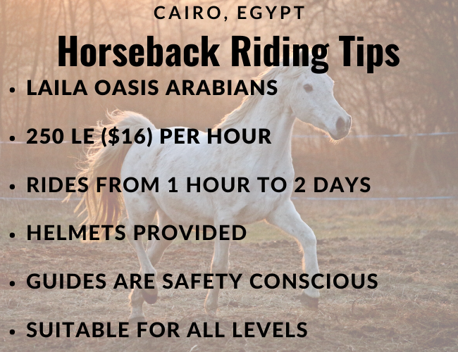 Details on horseback riding in egypt